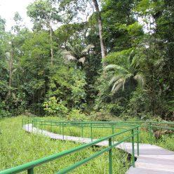 Pratt in Costa Rica