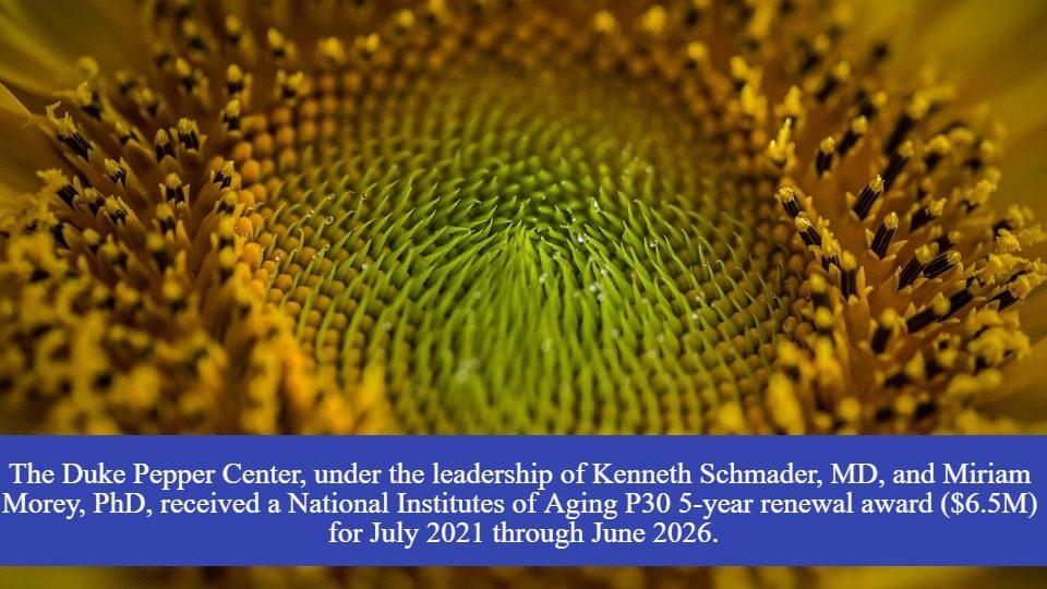 sunflower-960×540 Pepper renewal text