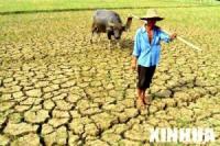 A farmer standing on barren earth