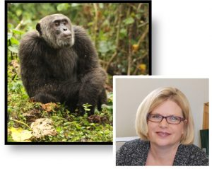 headshot of Melissa Emery Thompson and a picture of a chimpanzee