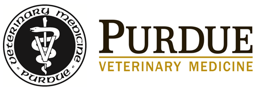 Veterinary Medicine writing the perfect research paper