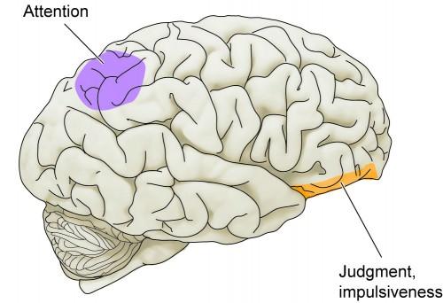brain-attention