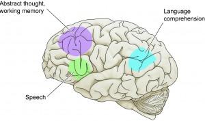 brain-speech