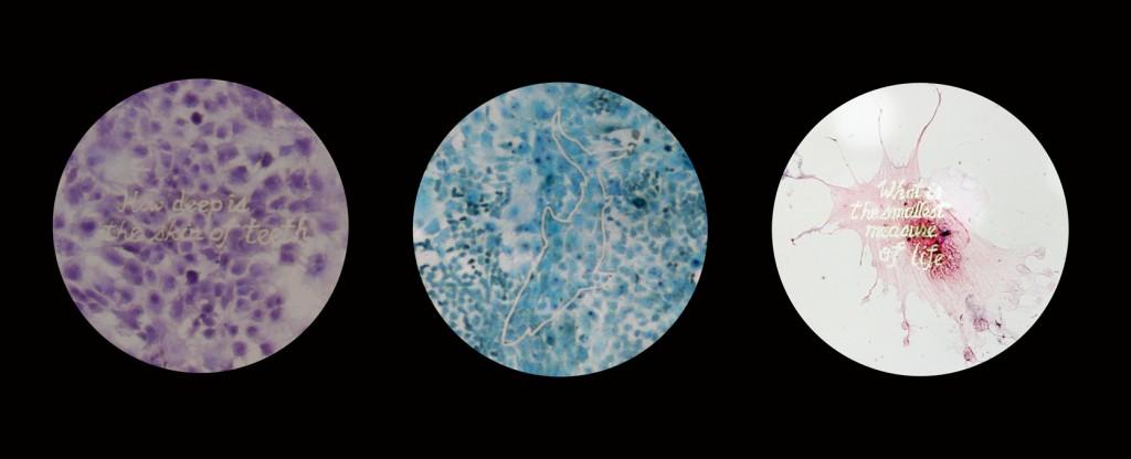 Amelogenesis (Im)Perfecta  SymbioticA, University of Western Australia 24