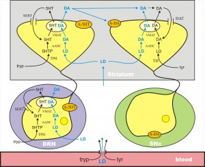 levodopafig1