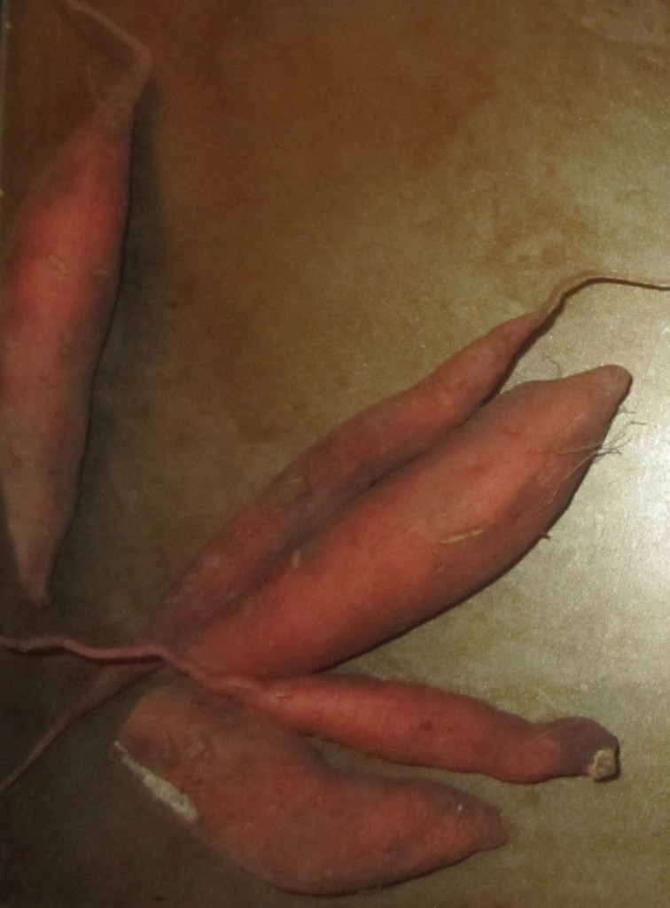 Harvestshot