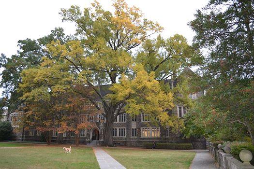 Soc-Psych tree