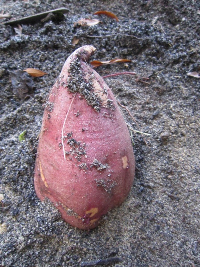sweet_potatoes2