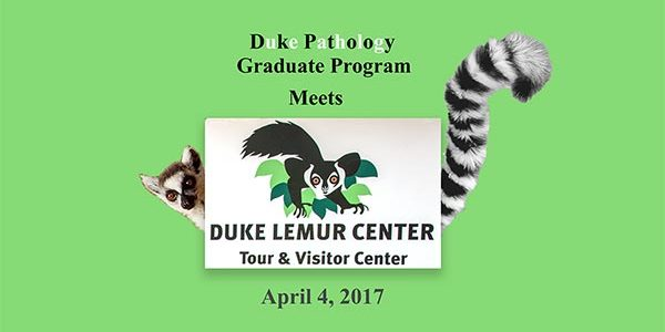 A Trip to Meet the Lemurs