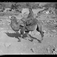 Camel & Rider, 1917-27