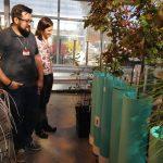 Nov2016: ORNL Populus greenhouses