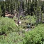 limber trail, 4 mile camp, CO