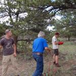 ponderosa pine, near Turtle Rock, WY