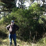 Bishop Pine: Tom Bruns at Pt. Reyes, Nov 2012