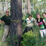 longleaf pine: southern Texas