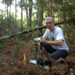 loblolly pine: Dave Lewis' back yard in east Texas