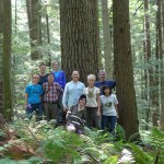 Pinus strobus:  Golds Woods, CT (with Bob Marra, Aug 2012)