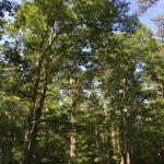 Duke Forest Korstian Division