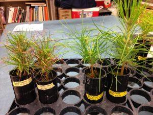 IMG_5576 (Postdoc position available:  Mycorrhizal Genomics, Bioinformatics)