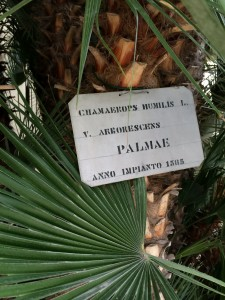 goethe-palm