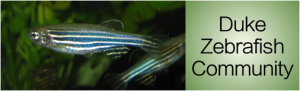 Triangle Zebrafish Symposium at Duke
